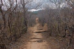 Trajeto marrom desolado da sujeira alinhado por árvores sem as folhas perto de um vulcão em Costa Rica fotos de stock