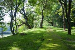 Trajeto Mystical na floresta tropical imagens de stock