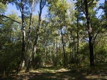 trajeto na floresta Fotos de Stock Royalty Free