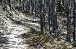 trajeto na floresta foto de stock royalty free