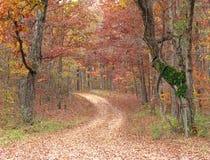 Trajeto na floresta Imagem de Stock
