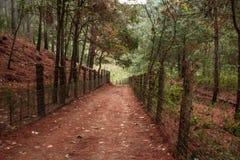 trajeto na floresta Fotografia de Stock