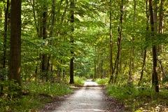 Trajeto na floresta com árvores bonitas Fotografia de Stock Royalty Free