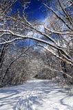 Trajeto na floresta do inverno Imagem de Stock Royalty Free
