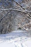 Trajeto na floresta do inverno Fotografia de Stock Royalty Free
