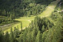 Trajeto na floresta, dolomites da montanha Imagem de Stock Royalty Free