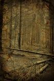 Trajeto na floresta escura assustador da árvore de abeto Fotos de Stock Royalty Free