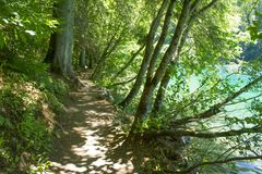 Trajeto na floresta, lago Tovel, Trentino Itália Imagens de Stock