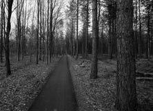 Trajeto na floresta no inverno Foto de Stock Royalty Free