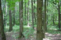 trajeto na floresta fotos de stock