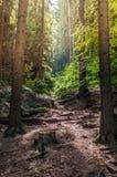 Trajeto na floresta profunda Imagens de Stock Royalty Free