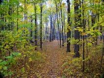 Trajeto na floresta na queda Fotografia de Stock Royalty Free