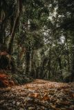 Trajeto na floresta tropical, vista do rés do chão fotografia de stock royalty free