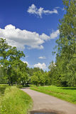 Trajeto na floresta verde Fotografia de Stock Royalty Free