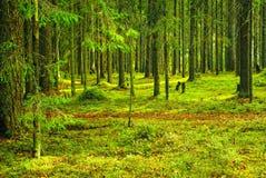 Trajeto na madeira do norte do verão Fotos de Stock Royalty Free