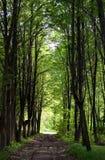 Trajeto nas madeiras Imagem de Stock