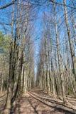 Trajeto nas madeiras Fotos de Stock