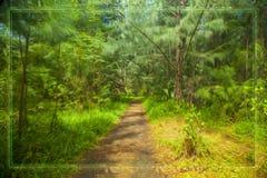 Trajeto nas madeiras Imagem de Stock Royalty Free