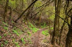 trajeto nas madeiras na primavera fotografia de stock