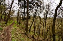 trajeto nas madeiras na primavera fotos de stock