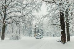 Trajeto nas madeiras no inverno, fundo natural da paisagem do inverno imagens de stock