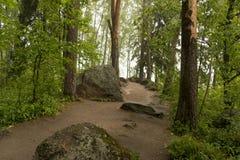Trajeto nas madeiras, o parque, entre as pedras e as árvores grandes, rai Imagem de Stock