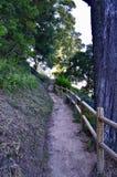 Trajeto natural na floresta fotografia de stock royalty free