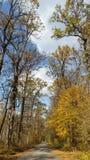 Trajeto nebuloso ao outono Fotos de Stock