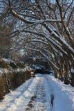 Trajeto nevado com árvores pendendo sobre Imagem de Stock