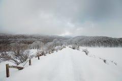 Trajeto nevado e Frosty Beech Forest fotos de stock royalty free