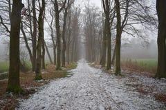 Trajeto nevado na floresta fotografia de stock royalty free
