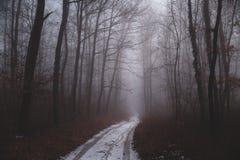 Trajeto nevoento na floresta imagem de stock