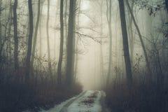 Trajeto nevoento na floresta imagens de stock