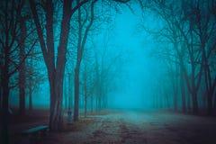 Trajeto nevoento no parque Imagens de Stock Royalty Free