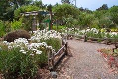 Trajeto no jardim do verão Foto de Stock Royalty Free