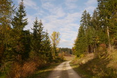 Trajeto no outono Fotos de Stock