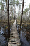 Trajeto no pântano Imagem de Stock Royalty Free