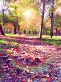 Trajeto nostálgico do parque do outono fotos de stock