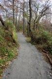 Trajeto para caminhadas entre árvores Imagens de Stock Royalty Free