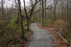 Trajeto para caminhadas entre árvores Imagens de Stock