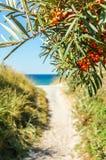 Trajeto para lixar a praia alinhada com espinheiro cerval Mar Báltico, Hiddensee fotos de stock royalty free
