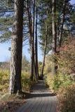 Trajeto pavimentado através das árvores fotos de stock