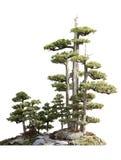 Trajeto pequeno através do suporte dos pinheiros, isolado Imagens de Stock