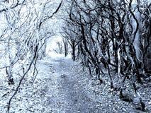 Trajeto preto e branco Fotografia de Stock