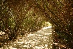 Trajeto protegido por árvores Fotografia de Stock