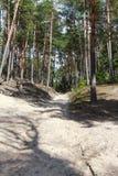 Floresta ensolarada do verão Imagem de Stock