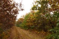 Trajeto que conduz através das árvores na floresta Fotografia de Stock