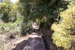 Trajeto que passa através de uma inclinação arborizada ao lado de um canal de água pequeno e que desce ao rio de Amud Fotografia de Stock Royalty Free