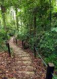 Trajeto Roped da selva para trekking seguro nas montanhas Fotografia de Stock