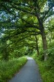 Trajeto running na floresta verde Imagem de Stock Royalty Free